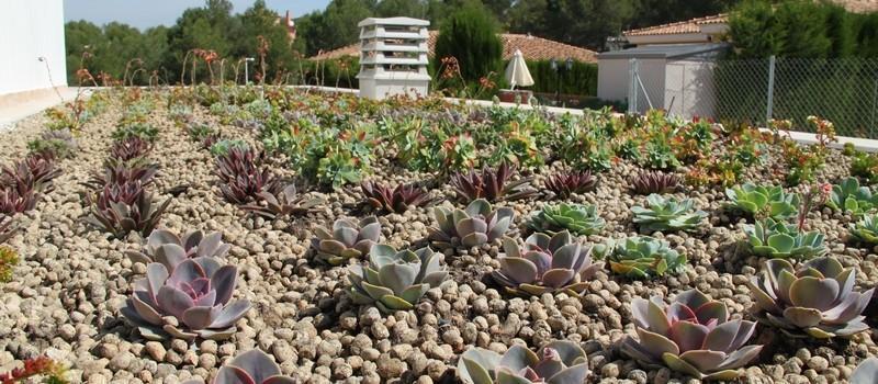 Cubierta vegetal Baobab en Valencia