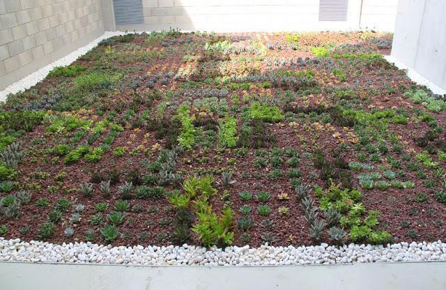 Sistemas de cubiertas vegetales urbanarbolismo for Piscinas ecologicas pdf