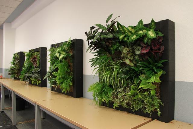 Imágenes del curso de jardines verticales en Madrid. Noviembre de 2012.