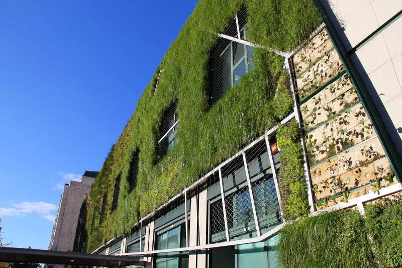 Finalizando la obra  del jardín vertical del Palacio de Congresos de Vitoria-Gasteiz.