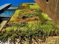 Jardín vertical autosuficiente en el centro histórico de Barcelona