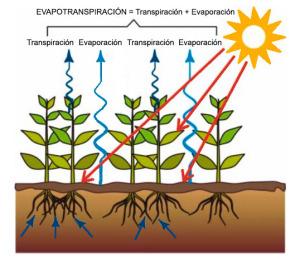 Evotranspiración en las cubiertas vegetales