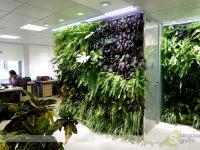 Conjunto de jardines verticales de interior para oficinas en Madrid