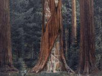 De las casas en el árbol a los rascacielos en los troncos