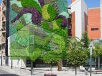 Rehabilitación del jardín vertical de San Vicente del Raspeig