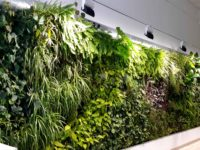 Aire acondicionado vegetal de nuestra oficina